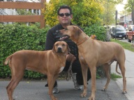 Dogs boarding 2011 001